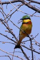 birdinzambia.JPG