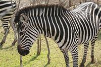 zebraSun.jpg